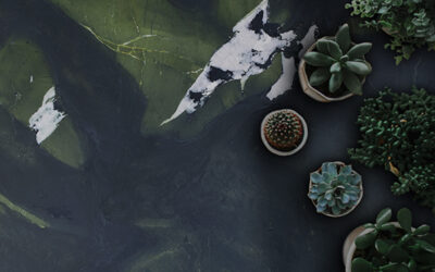 How we can improve our living spaces with biophilic design