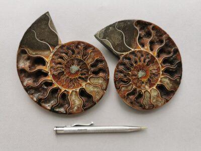 ammonite-natural-stone-fossil